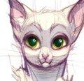 Kody_the_Cat by xepxyu
